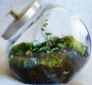 Moss terrarium candy jar