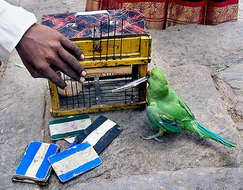 Fortune Telling Parrot + Cage